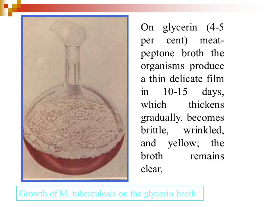 On glycerin (4-5 per cent) meat-peptone broth the organisms produce a thin delicate film in 10-15 days, which thickens gradually, becomes brittle, wrinkled, and yellow; the broth remains clear.