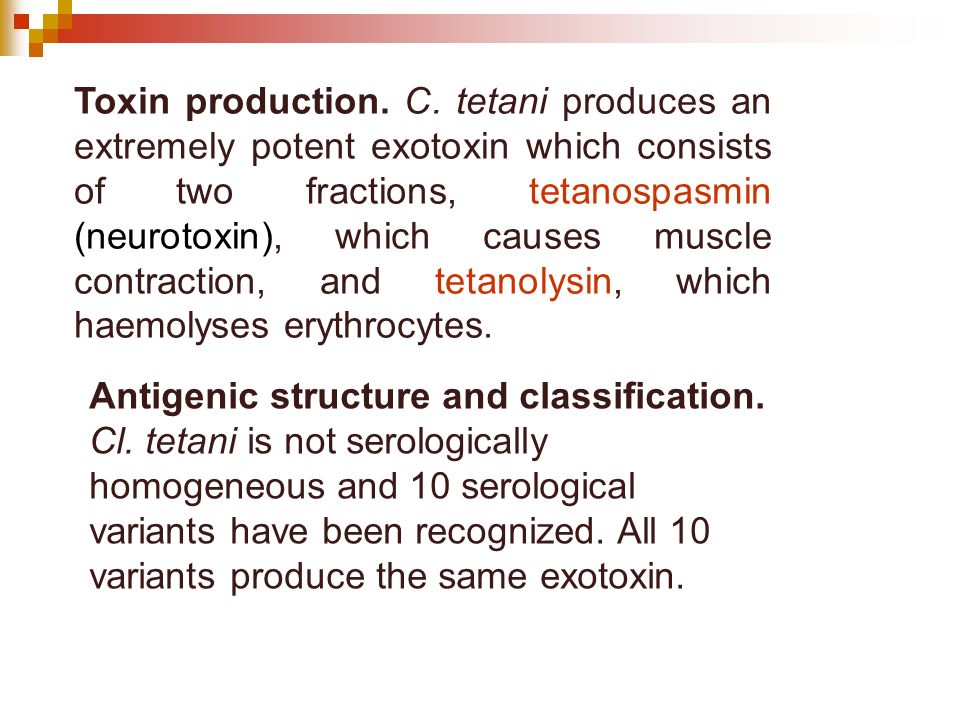 Toxin production. C. tetani produces an extremely potent exotoxin which consists of two fractions, tetanospasmin (neurotoxin), which causes muscle contraction, and tetanolysin, which haemolyses erythrocytes.