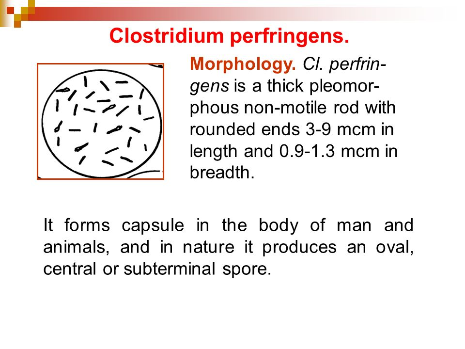 Clostridium perfringens.