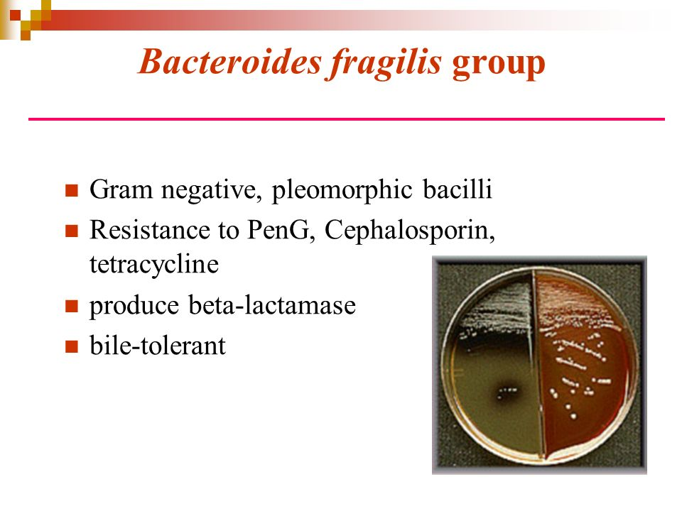 Bacteroides fragilis group