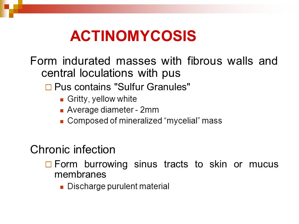 ACTINOMYCOSIS Form indurated masses with fibrous walls and central loculations with pus. Pus contains Sulfur Granules