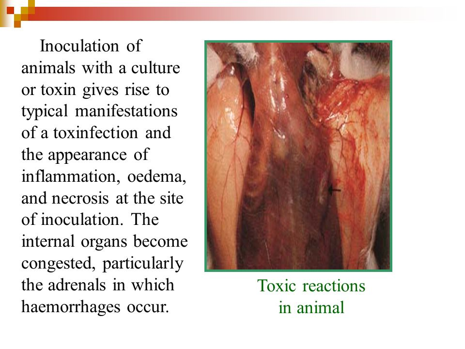Inoculation of animals with a culture or toxin gives rise to typical manifestations of a toxinfection and the appearance of inflammation, oedema, and necrosis at the site of inoculation. The internal organs become congested, particularly the adrenals in which haemorrhages occur.