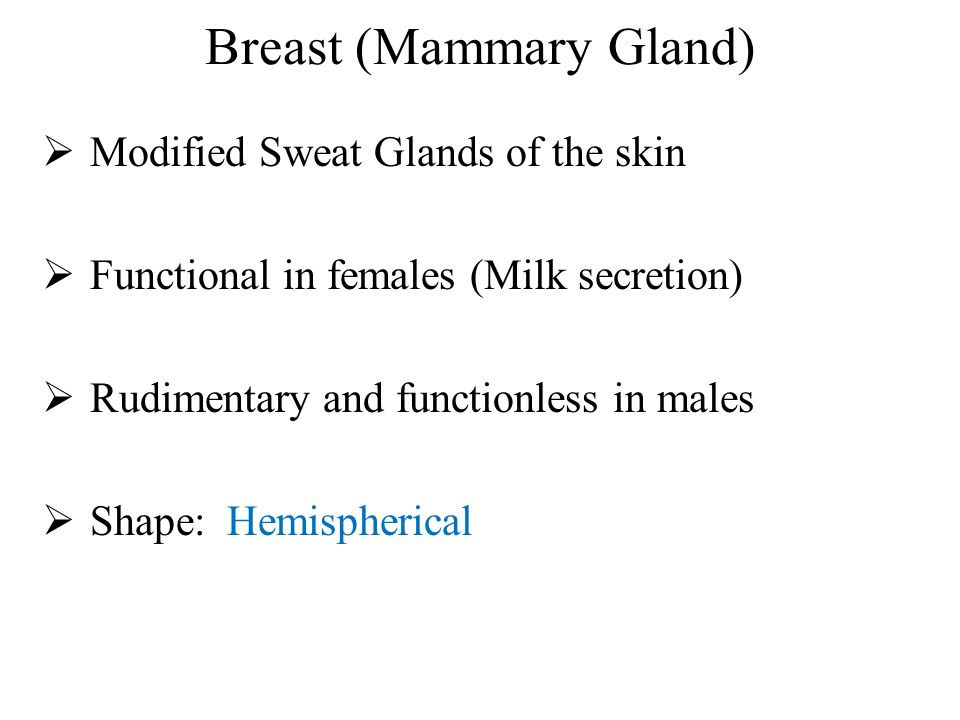 Anatomy and Development of Breast (Mammary Gland) - ppt video online ...