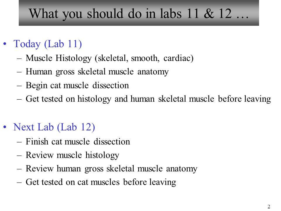 Bio 101 Laboratories 11 12 Muscle Histology Gross Human Skeletal