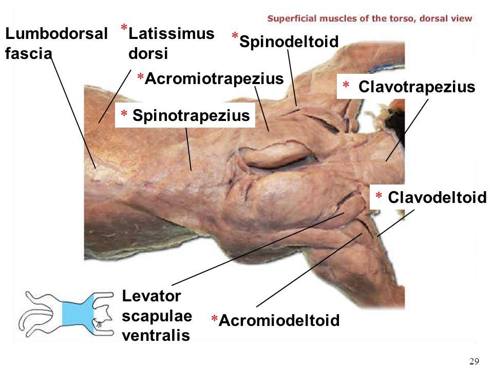 Bio 101 Laboratories 11 12 Muscle Histology Gross Human Skeletal