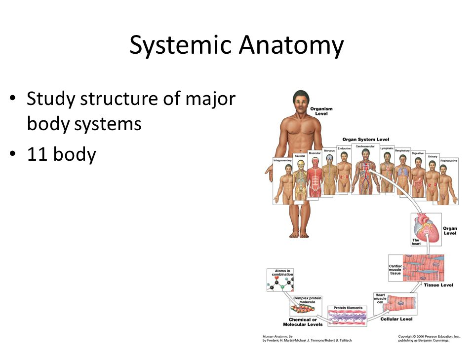 What is systemic anatomy