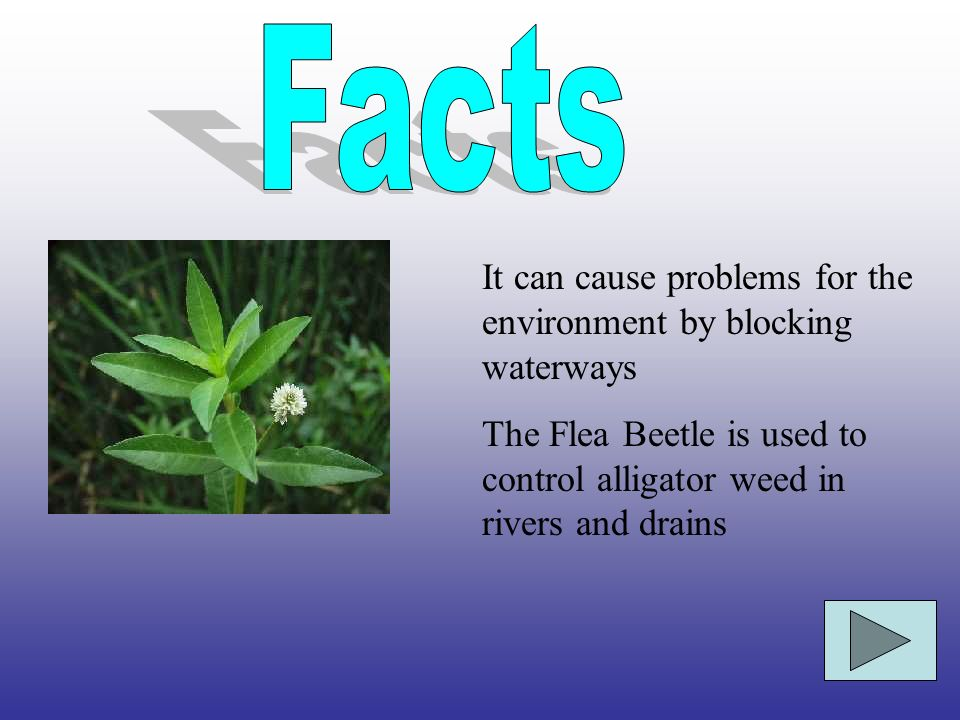 Facts It can cause problems for the environment by blocking waterways