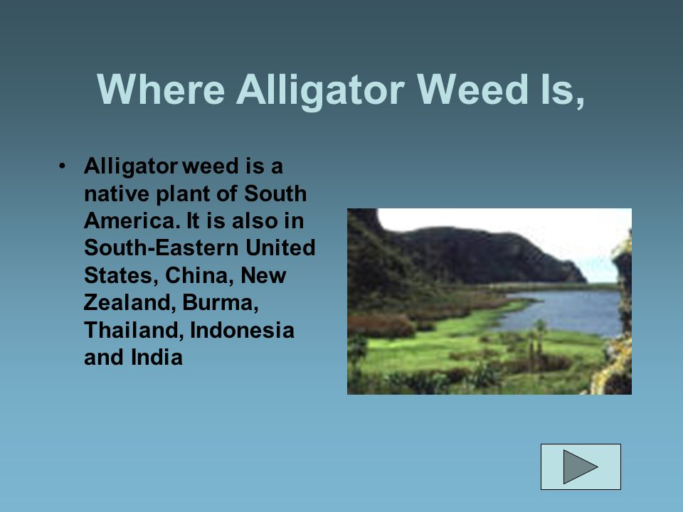 Where Alligator Weed Is,