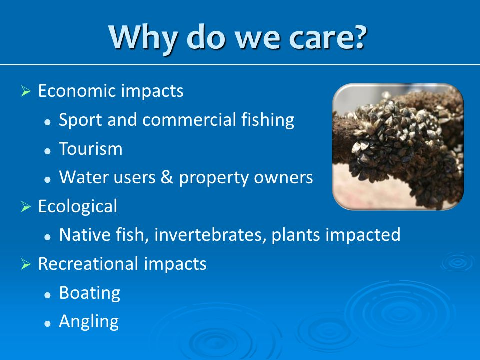 Why do we care Economic impacts Sport and commercial fishing Tourism