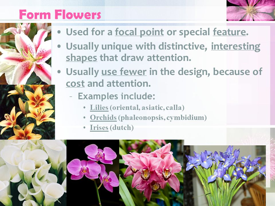 Flower Types For Floral Design Ppt Download