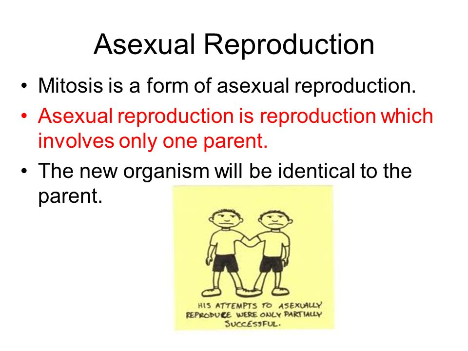 Why is mitosis a form of asexual reproduction images 56