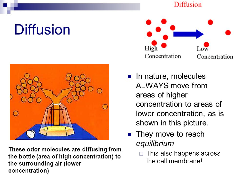 Diffusion In nature, molecules ALWAYS move from areas of higher concentration to areas of lower concentration, as is shown in this picture.