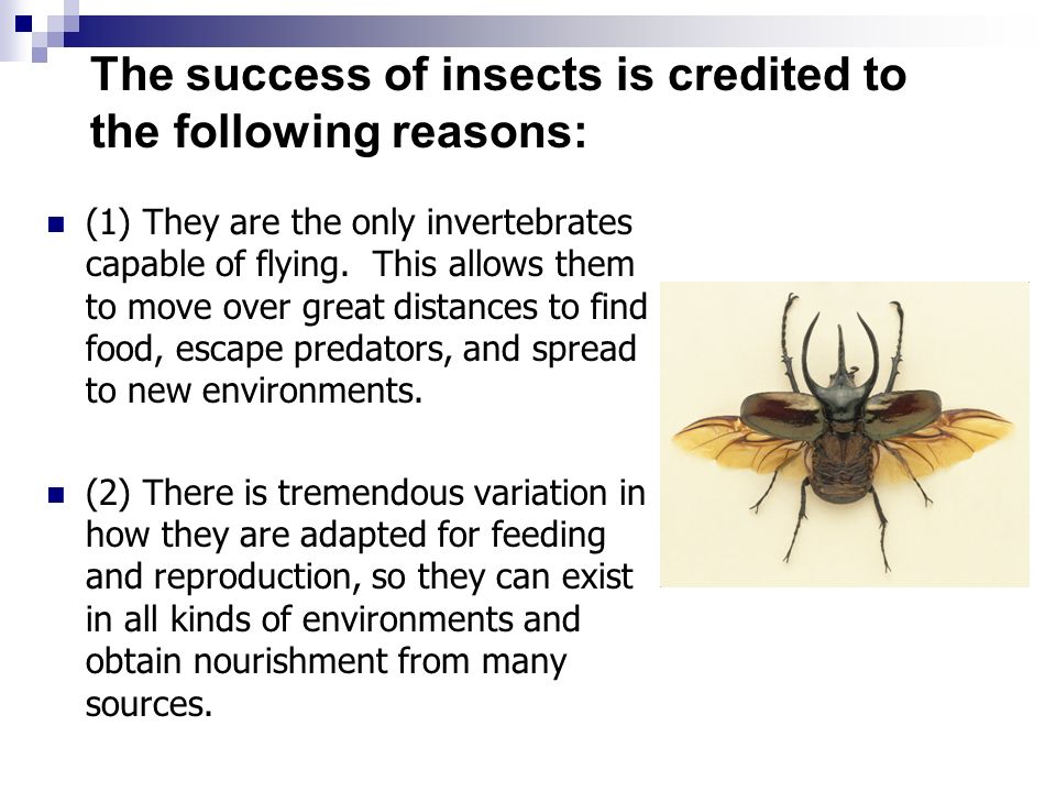 why are insects so successful on earth