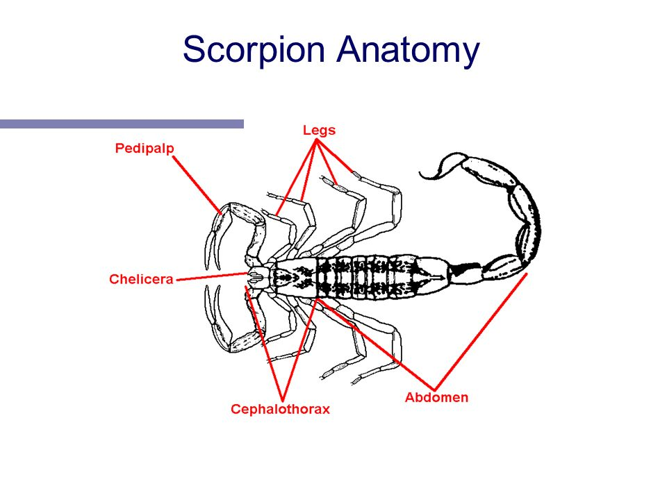 Arthropods. - ppt download