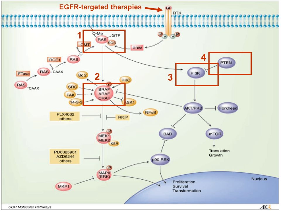 EGFR-targeted therapies