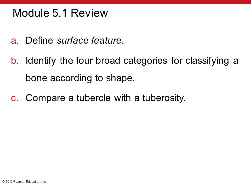 5 The Skeletal System. - ppt download