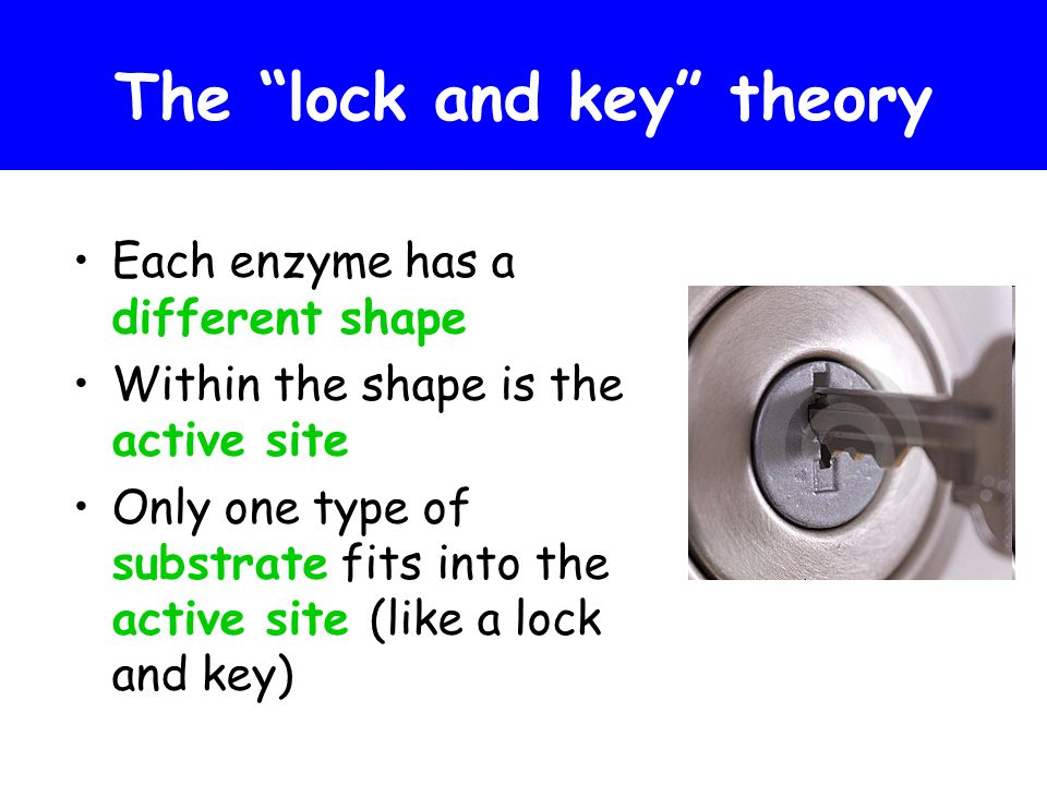 The lock and key theory