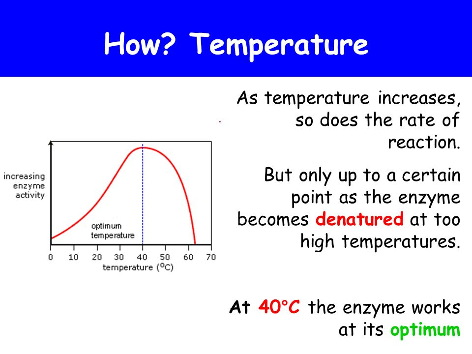 How Temperature As temperature increases, so does the rate of reaction.