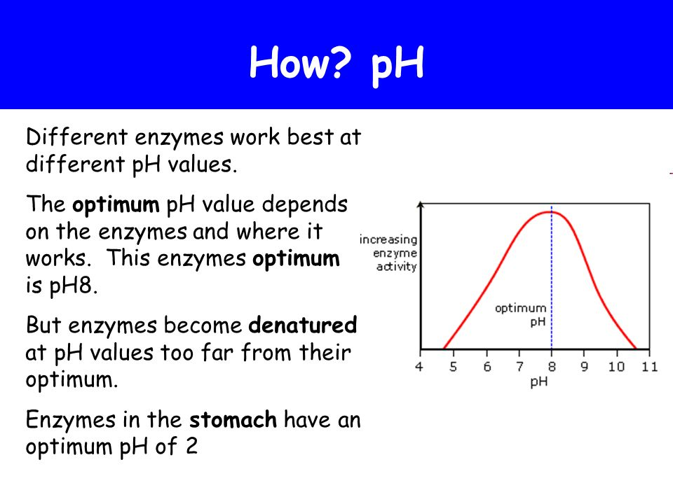 How pH Different enzymes work best at different pH values.