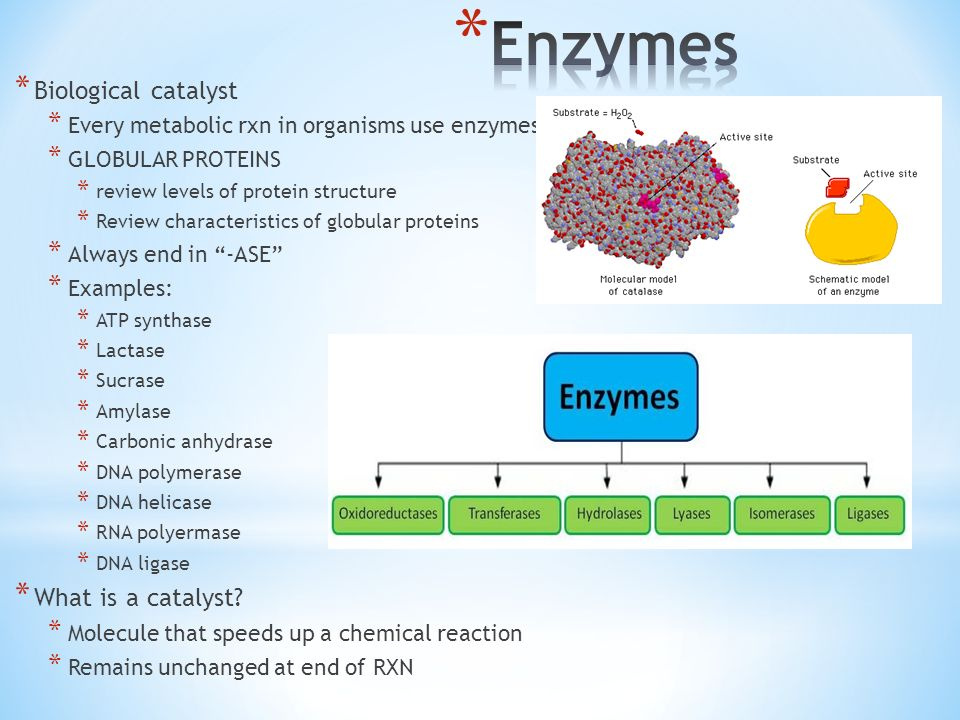 enzymes part 1 chapter ppt download