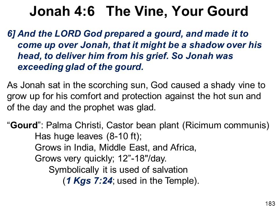 Jonah 4:6 The Vine, Your Gourd