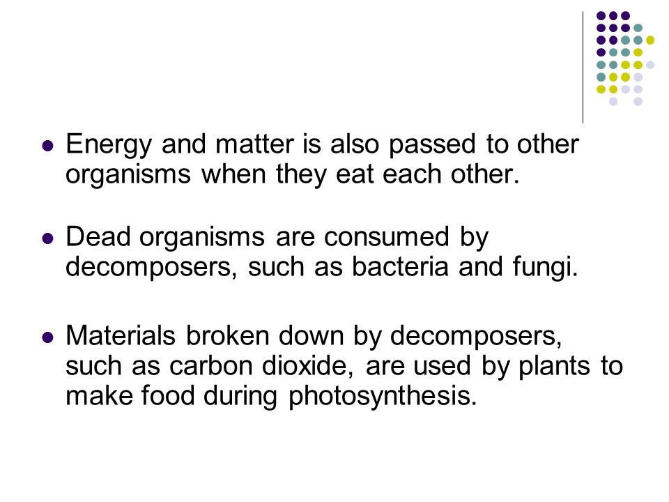 Energy and matter is also passed to other organisms when they eat each other.
