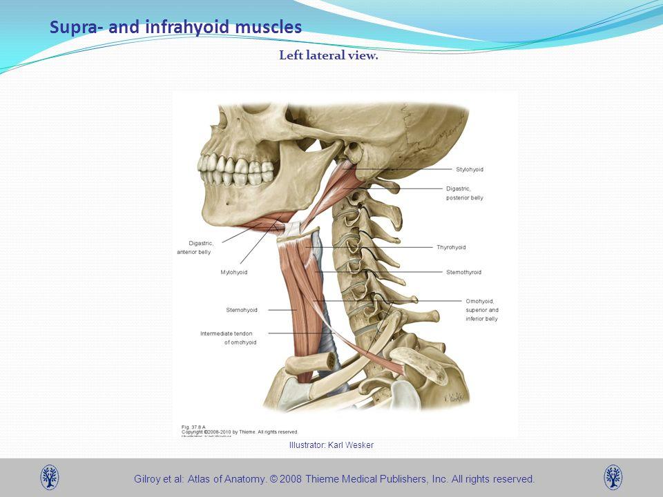 Jonathon R. Kirsch, D.O., C-NMM/OMM Associate Physician - ppt download
