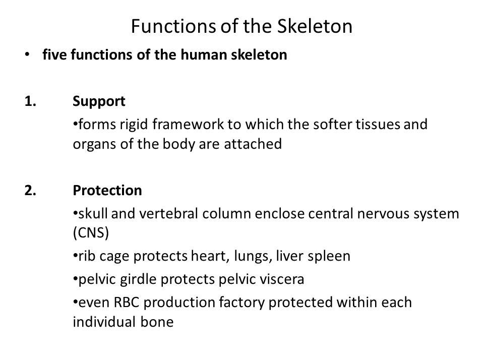 Skeletal System Osteology The Studyscience Of Bones Human
