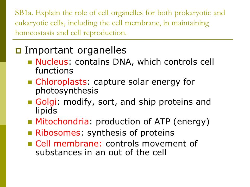 why are organelles important to the cell