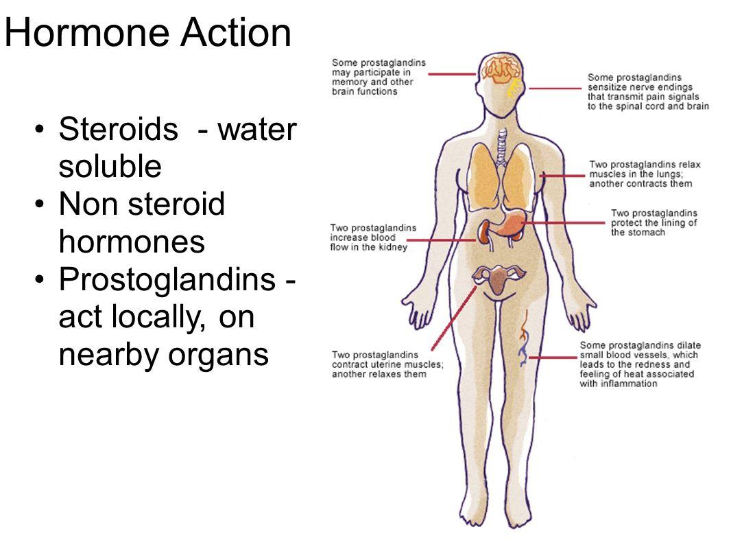 Sex Hormone Binding Globulin