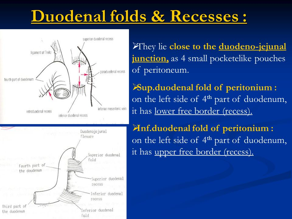 The Duodenum It Is The First And Widest Part Of The Small Intestine