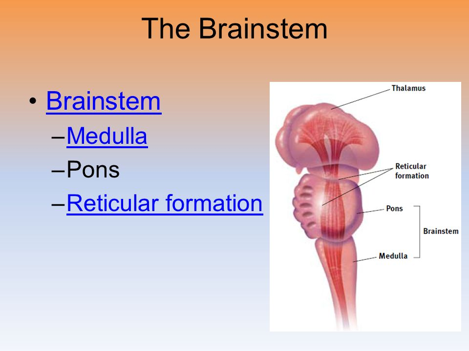 Ap psych brain diagram reticular formation electrical work wiring myers psychology for ap ppt video online download rh slideplayer com human brain diagram and functions parts of the brain stem ccuart Choice Image