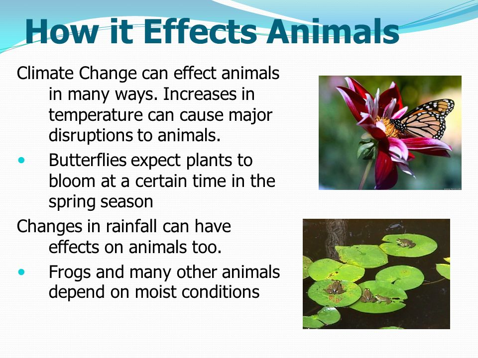 effect of climate change on animals Overall, climate change could make it more difficult to grow crops, raise animals, and catch fish in the same ways and same places as we have done in the past the effects of climate change also need to be considered along with other evolving factors that affect agricultural production, such as changes in farming practices and technology.