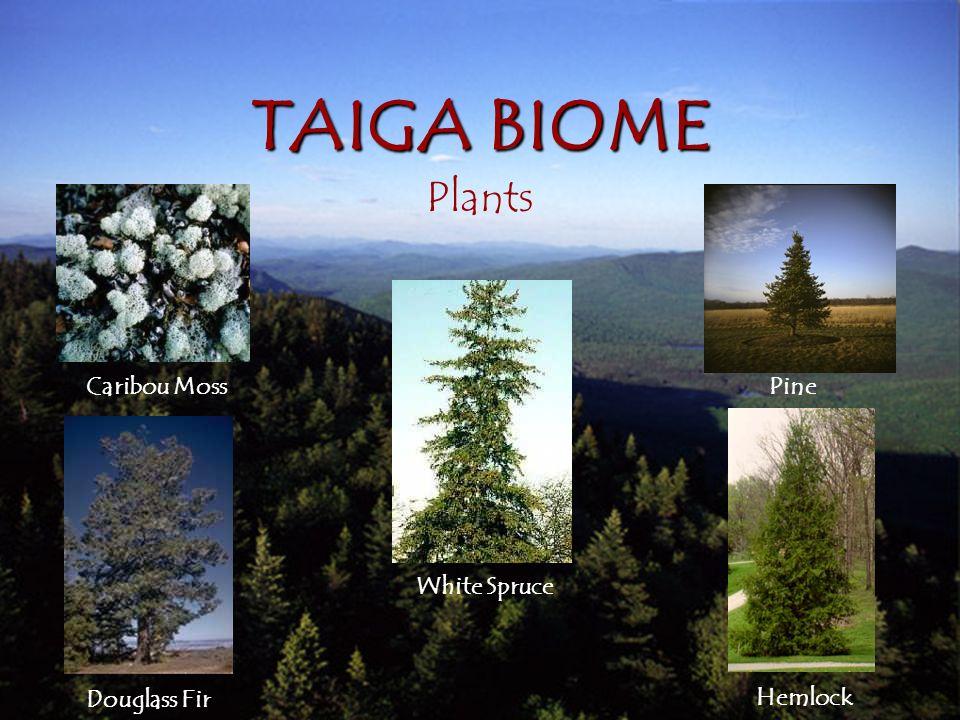 5 Plant Adaptation