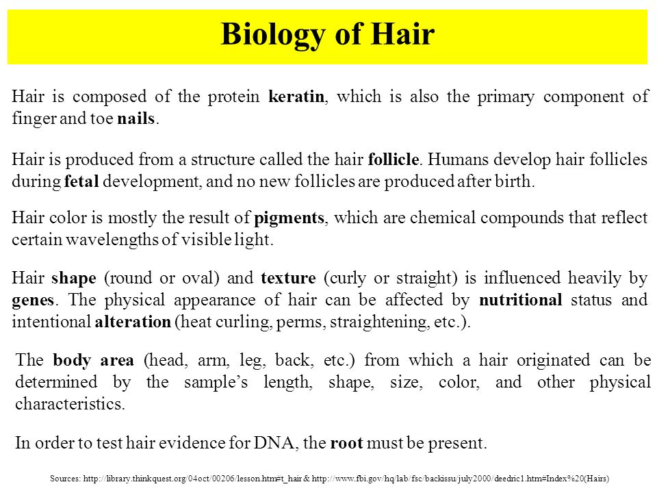 Hairs & Fibers Forensic Science. - ppt video online download