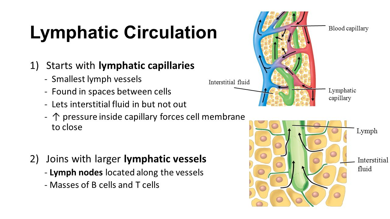 Chapter 17 The Lymphatic System And Immunity Ppt Video Online Download