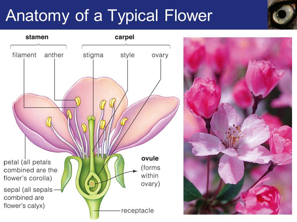 Biology Flower Askiitians