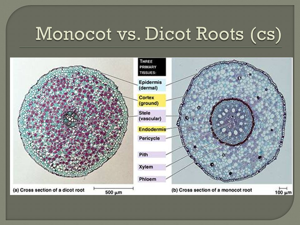 Plant Structure Roots Stems And Leaves Ppt Video Online Download