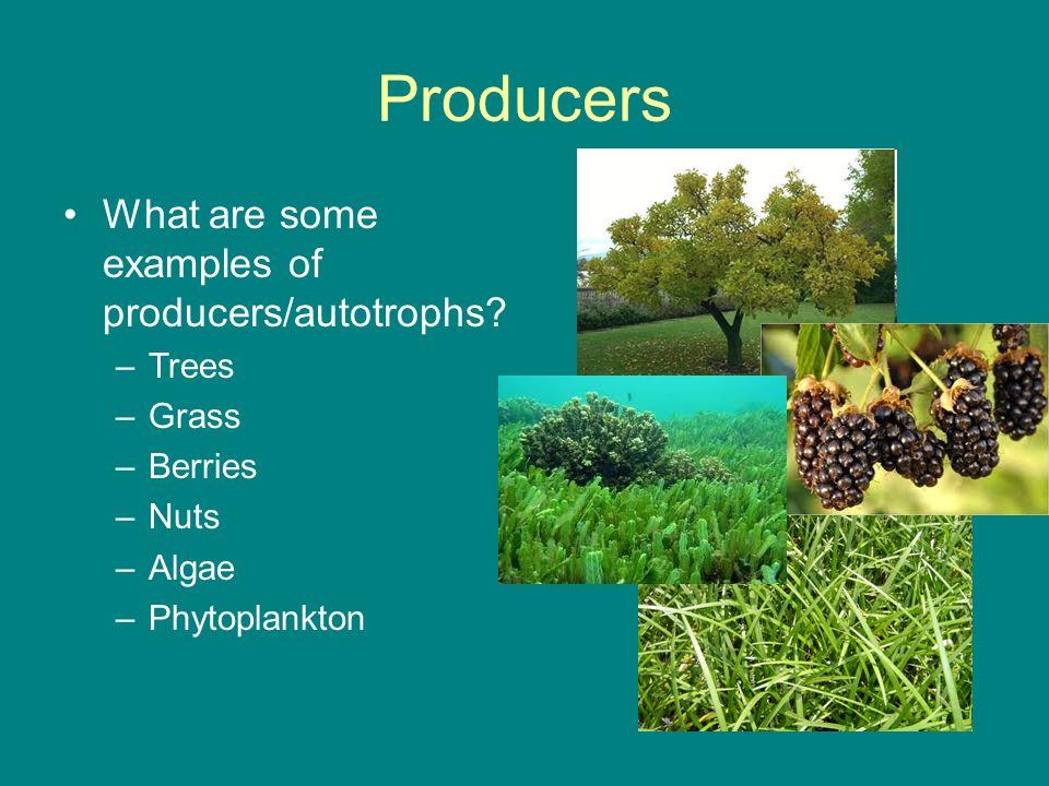 Autotrophs Examples