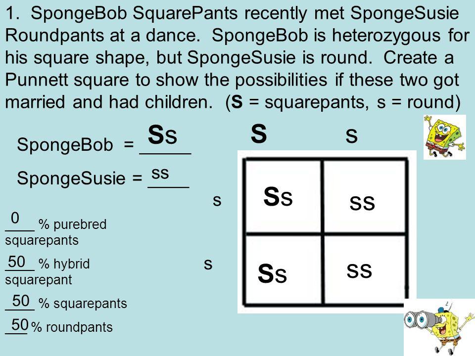 Bikini Bottom Geics Ppt Video Online Download. Spongebob Squarepants Recently Met Spongesusie Roundpants At A Dance Is Heterozygous For. Worksheet. Spongebob Dihybrid Crosses Worksheet Answers At Mspartners.co