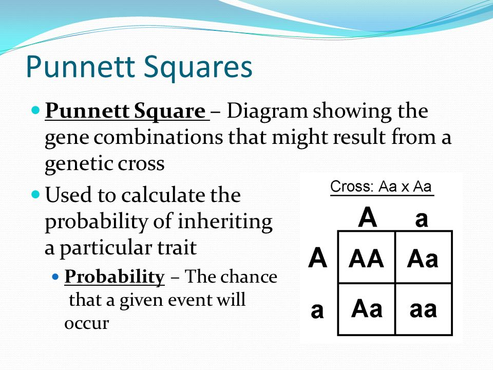 Admirable Punnett Square Notes By Ms Duko Ppt Download Wiring Digital Resources Remcakbiperorg