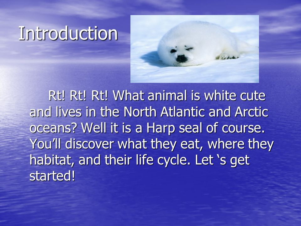 the harp seal essay A touching harp seal cub with its mother in iceberg green ice and water is featured in block #2 of the ice habitats quilt series harp seals ice cavern pattern includes: a placement diagram, fabric table, pattern pieces, block assembly directions, the essay harp seals, and a save the earth tip.