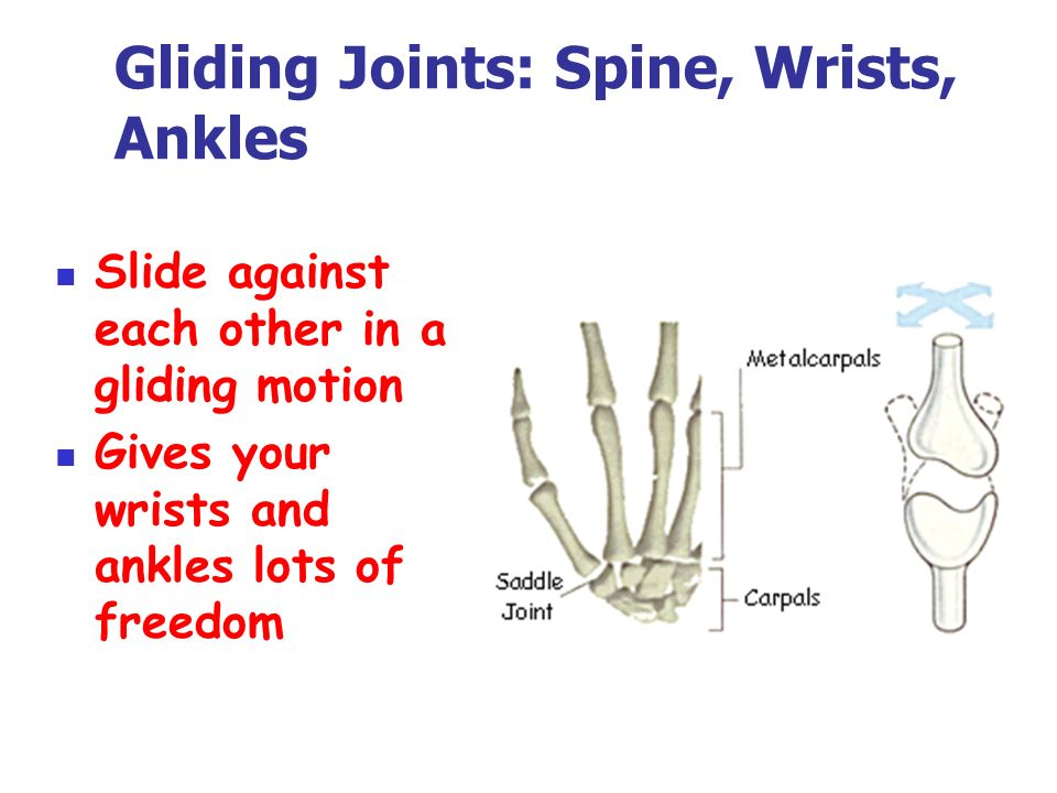 Bones Muscles Ppt Download