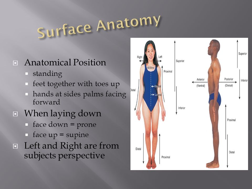 Directional Terms and Body Cavities - ppt download