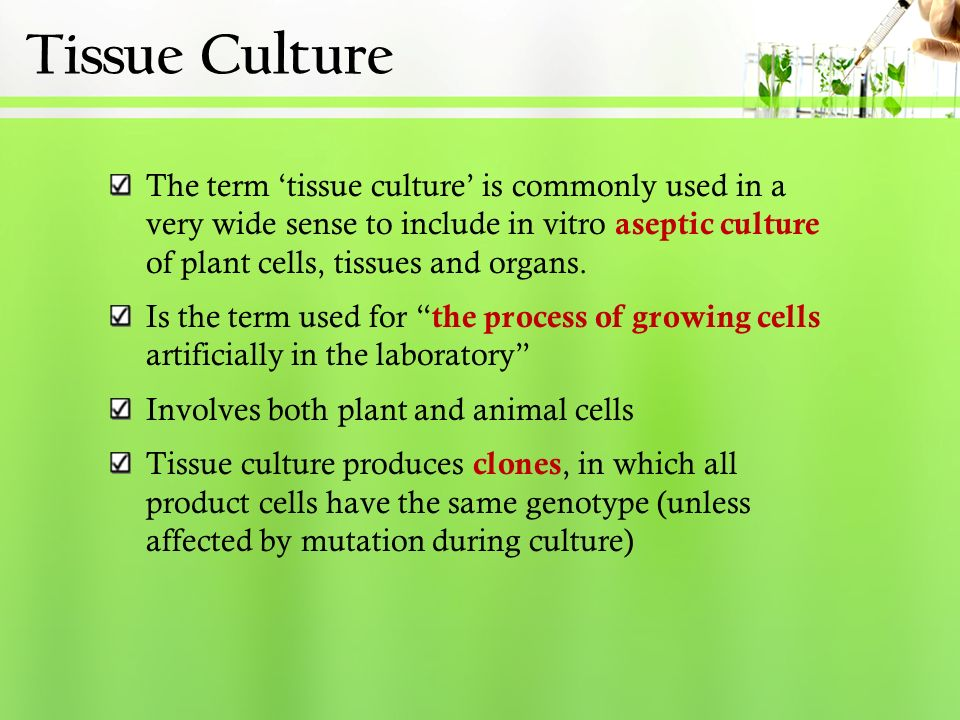 Basic Principles & Protocol in Plant Tissue Culture - ppt video