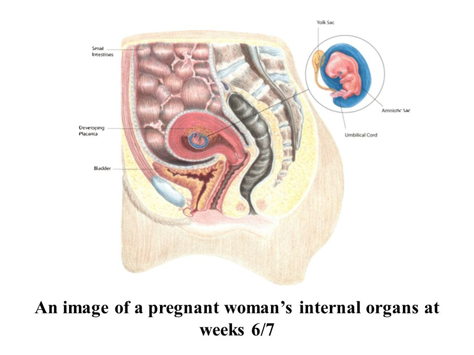 Anatomy and physiology of pregnancy - ppt download