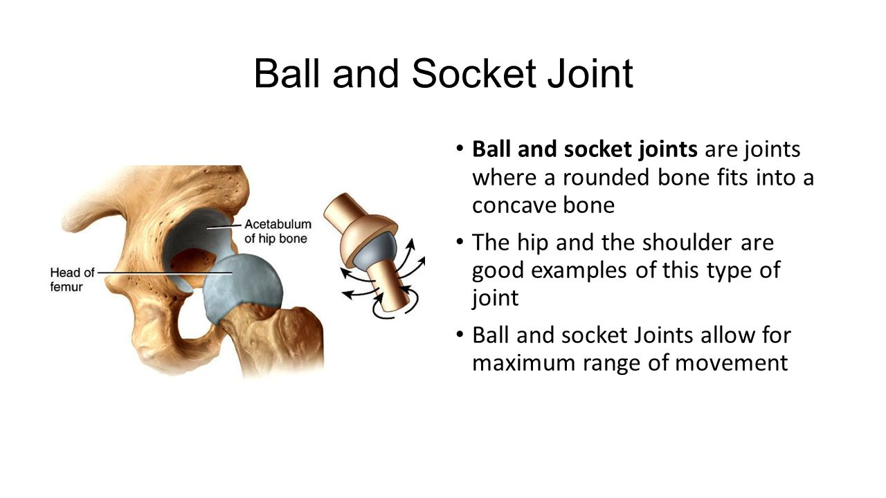 The Moving Part Of Anatomy Ppt Video Online Download