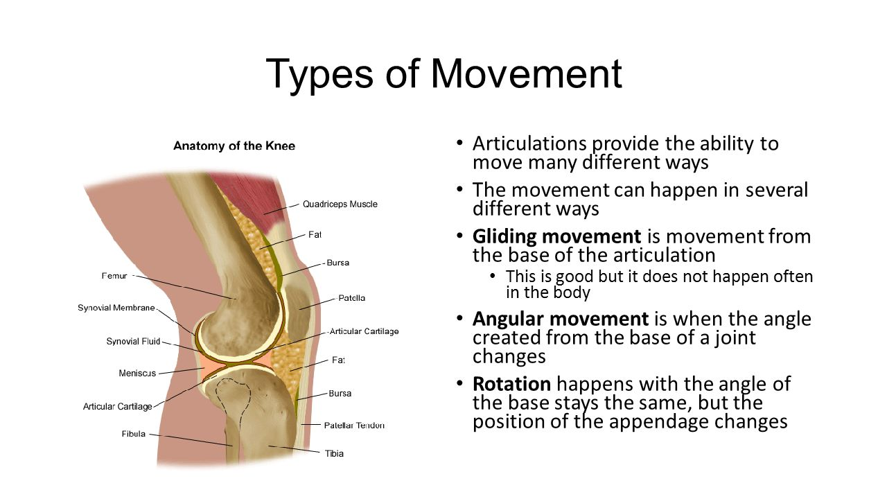 "The ""Moving"" Part of Anatomy! - ppt video online download"