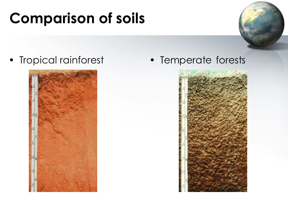 Comparison of soils Tropical rainforest Temperate forests