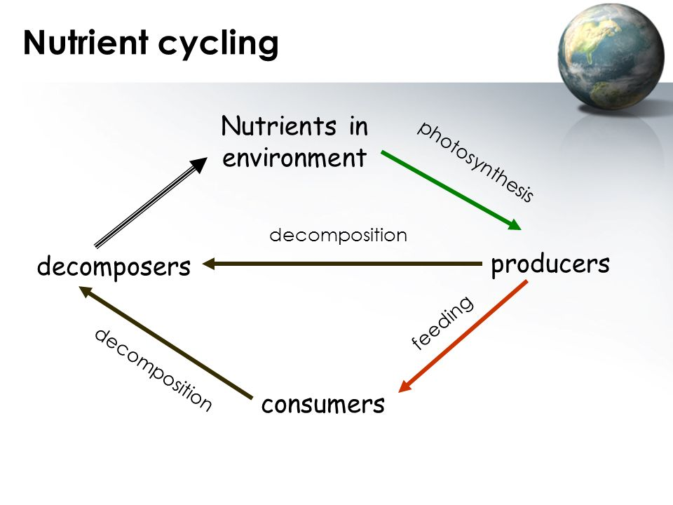 Nutrients in environment